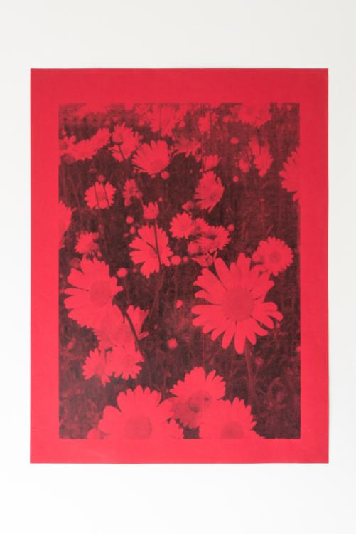 tulipe flower — Charlotte Houette, Artiste