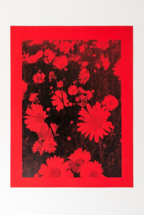 coquelicot flower — Charlotte Houette, Artiste